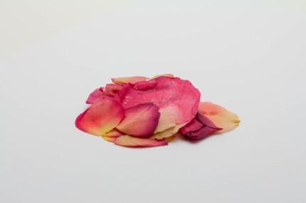 roze-reitoukaben